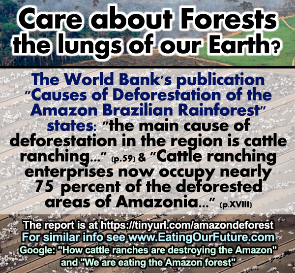World Bank Report Amazon Forest Deforestation Cattle Meat Livestock Animal Ag Agriculture Greenhouse Gas Carbon Footprint Climate Change Destroy Damage Pollute Environment Wastes Water Fuel Energy Grain Resources Vegetarian Vegan Benefits Lifestyle Health Diet