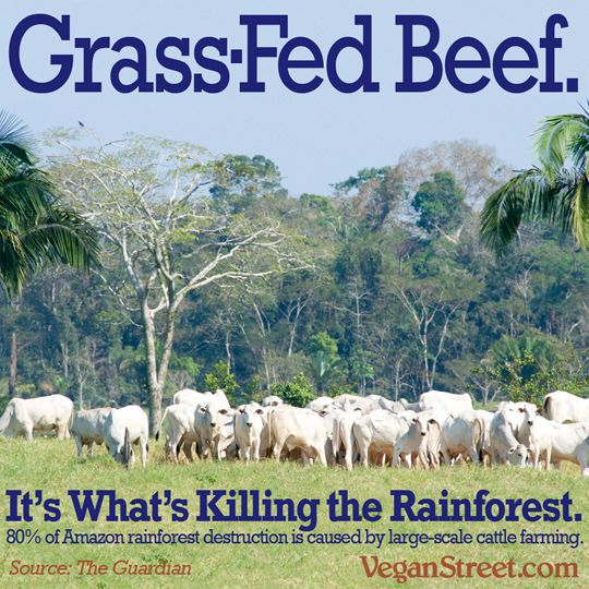 amazon deforestation for grass fed beef