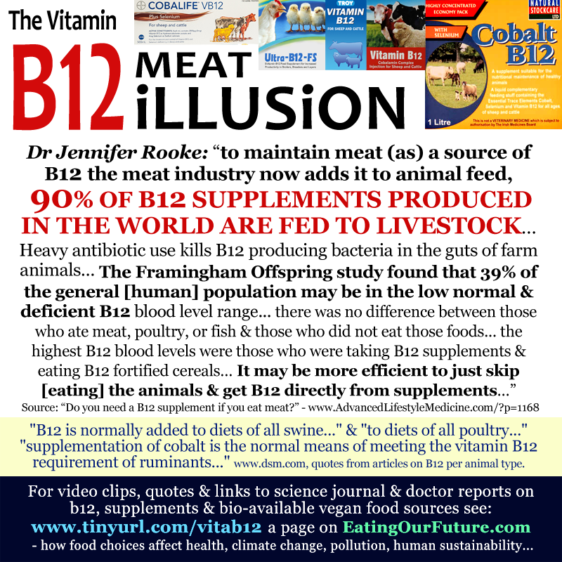 Best Vegan Memes Vitamin B12 Cobalamin Lacking Deficiency Myths Facts Quotes Reports Livestock Farm Animals Deficient Supplements Consuming Eating Meat Dairy Eaters Lies Truth Studies Consumption Vegetarian Omnivore Diets Supplementation Pix