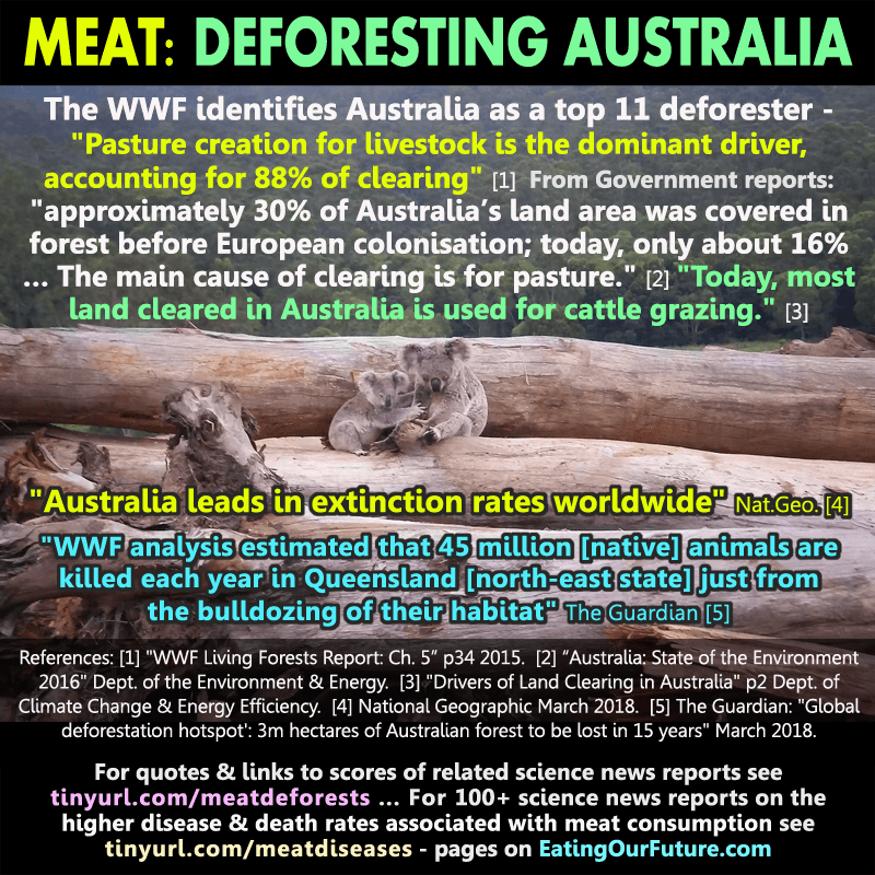Australian Deforestation animal feed extinction Australia quotes facts studies data debunk refute how much what % per cent amount land clearing deforest deforesting WWF Living Forests report caused pasture meat cows animal agriculture cattle statistics